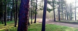 dirt road through trees
