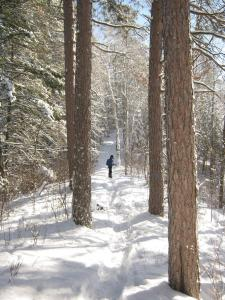 photo of trees and snow with snowshoer