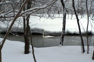 Cruisin' the Fish Hook River