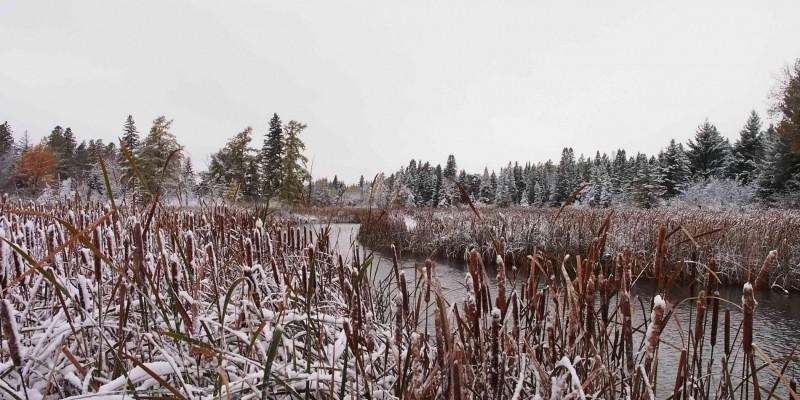 Snowy marsh scene