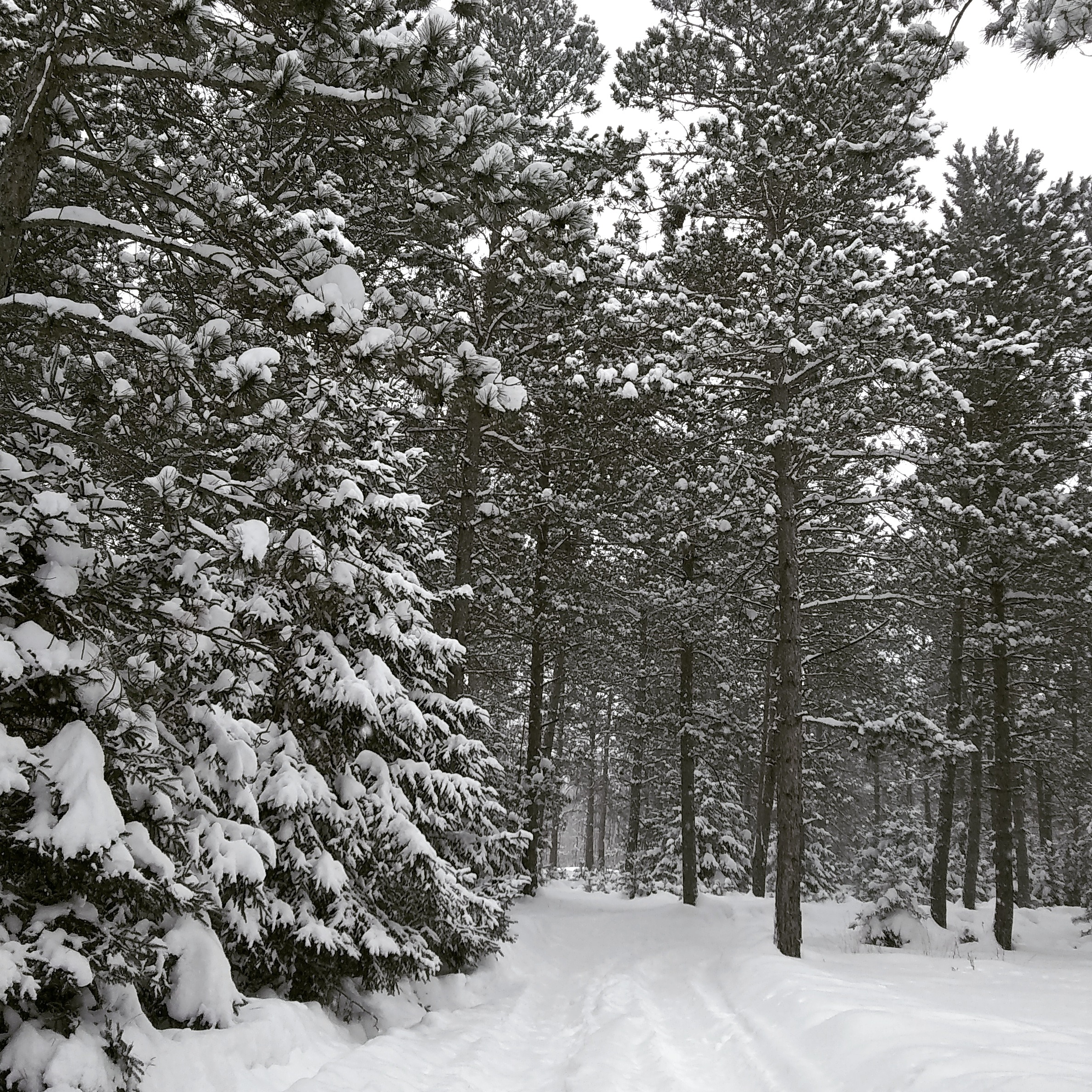 dfc1d130182 Snowmobile and Ski Trail Conditions - 2.7.2019 - Park Rapids